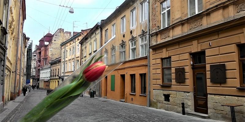Lviv hakkında